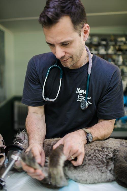 伊夫, 動物, 動物救援 的 免費圖庫相片