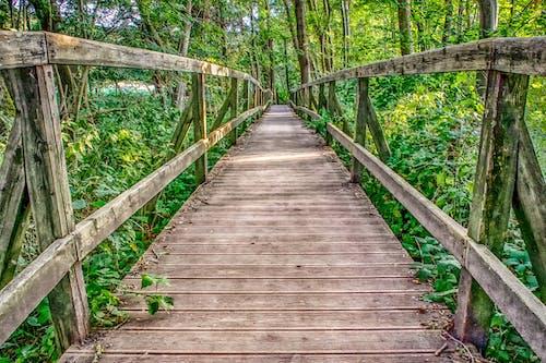 Free stock photo of nature, way, wooden bridge