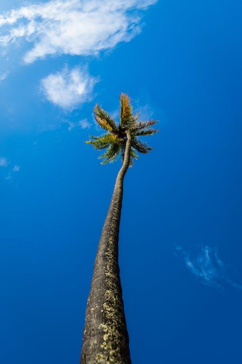 Photos gratuites de aquatique, arbre, bateaux, brillant