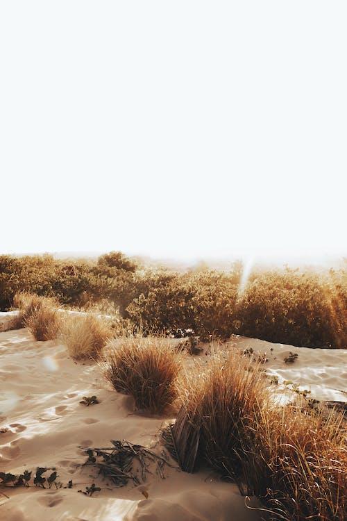Dry high grass in sandy terrain