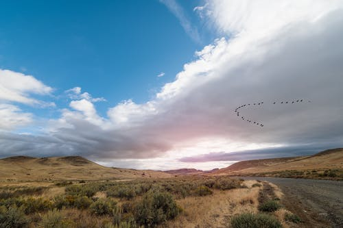 Flock of birds flying over hills and grassy terrain