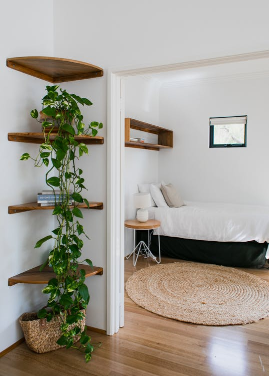 Interior of cozy lounge with potted green plants on shelves