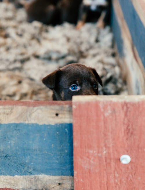 Cute little puppy with black fur and blue eyes sitting in shabby wooden enclosure and looking away with interest