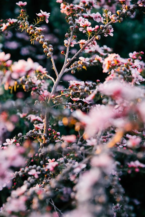 Delicate pink flower blossoming on tall plant branches and growing in lush verdant nature