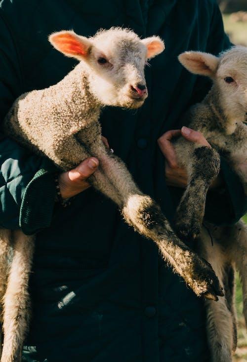 Fotos de stock gratuitas de adorable, agricultor, agricultura