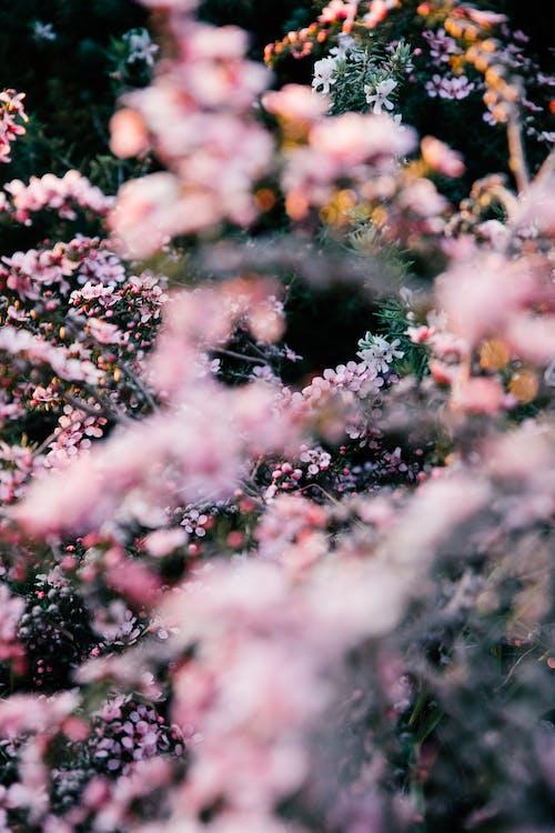 açık hava, aroma, aromatik içeren Ücretsiz stok fotoğraf