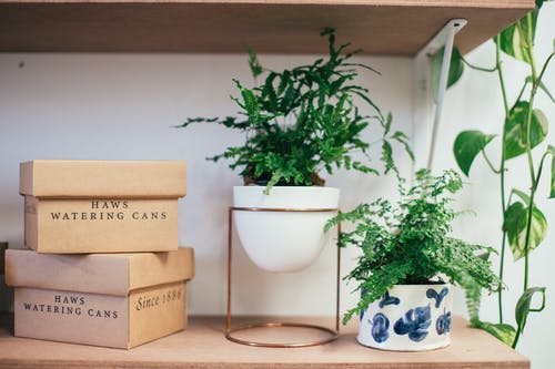 Potted plants with fresh verdant leaves arranged with stack of carton boxes on shelf
