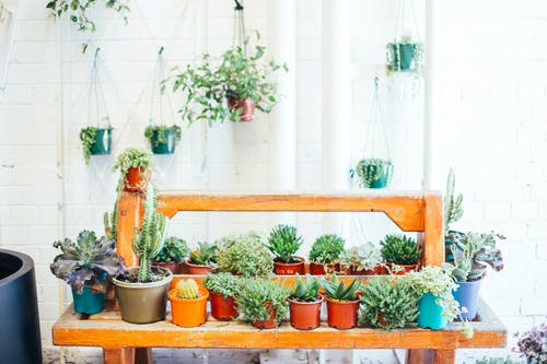 Many potted fresh verdant plants placed on timber shelves and hanging on walls