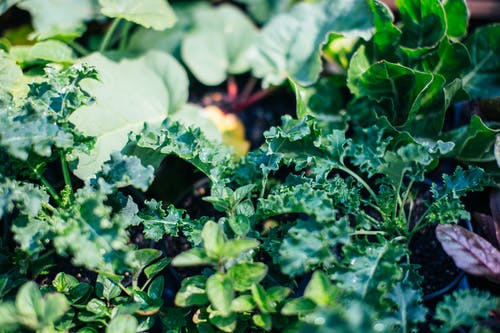 Plants with verdant fresh leaves growing on soil in summer garden in sunny weather