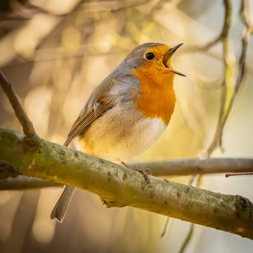 Photos gratuites de animal, appeler, arbre