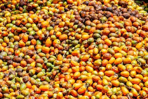 Orange and Yellow Round Fruits