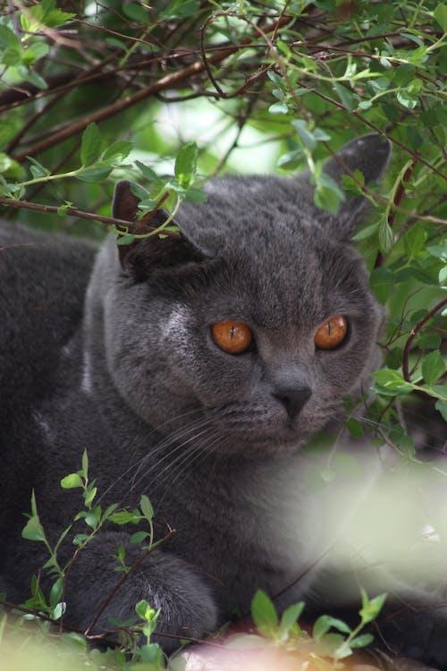Foto stok gratis alam, binatang, cute