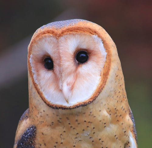 White and Brown Owl Figurine