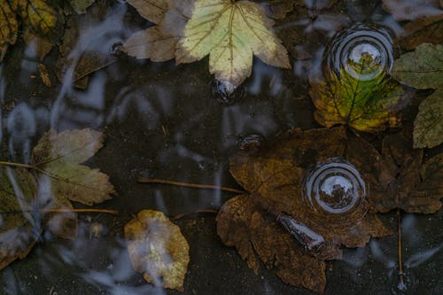 Green and Brown Leaves on Water