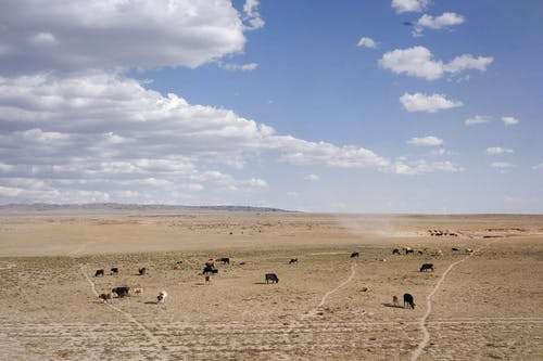 Group of Animals on Brown Field Under Blue Sky