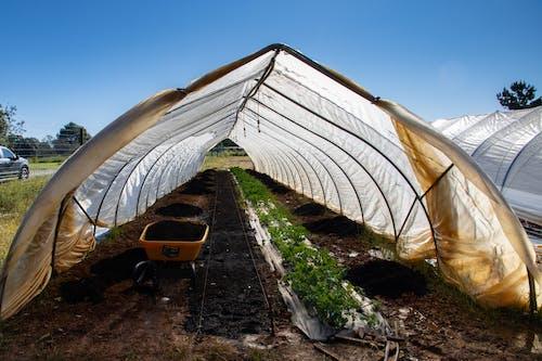 Photos gratuites de agbiopix, agriculture, chou frisé, chou kale