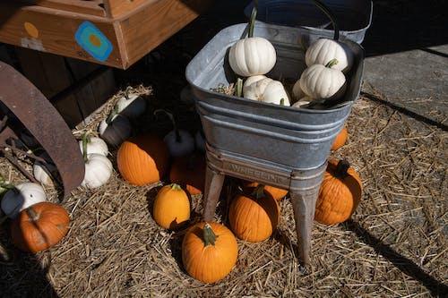 Photos gratuites de agbiopix, agriculture, automne, citrouille