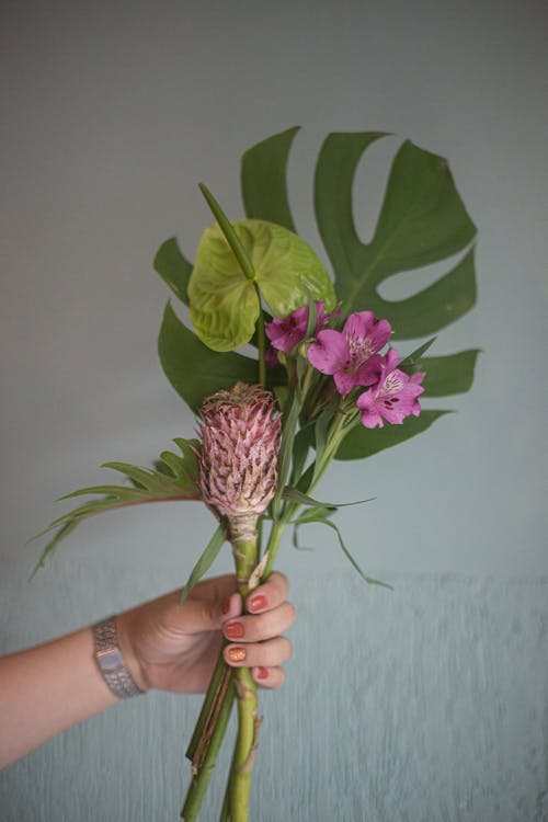 Person Holding Purple Flower With Green Leaves