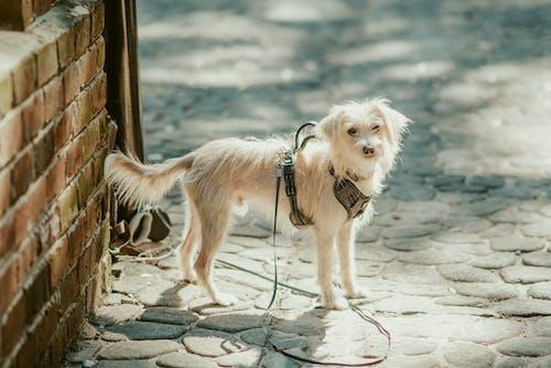 Cute white dog on street