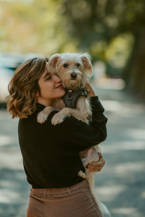 Back view cheerful young female wearing casual clothes carrying and hugging cute fluffy Yorkshire Terrier dog while standing on sunny street