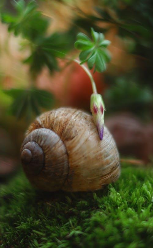 Kostenloses Stock Foto zu blühen, blumen, blüte, fauna
