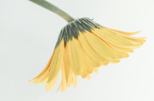 Yellow and Blue Flower in Close Up Photography