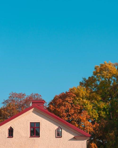 Kostnadsfri bild av arkitektur, blå himmel, blad