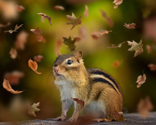 Photos gratuites de adorable, animal, arbre