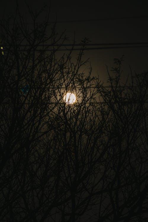 Foto profissional grátis de alvorecer, amanhecer, árvore, aurora