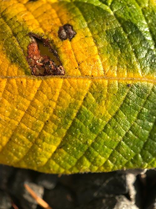 Photos gratuites de arbre, automne, bois, brillant