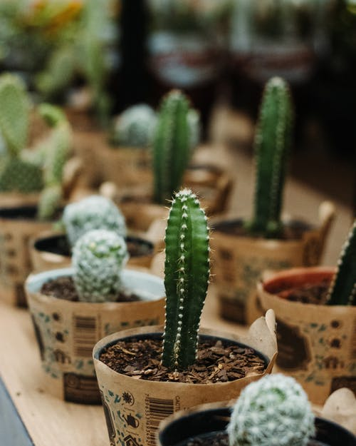 Green Cactus Plant in Brown Clay Pot
