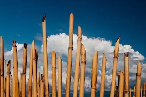 竹子, 雲 的 免费素材图片