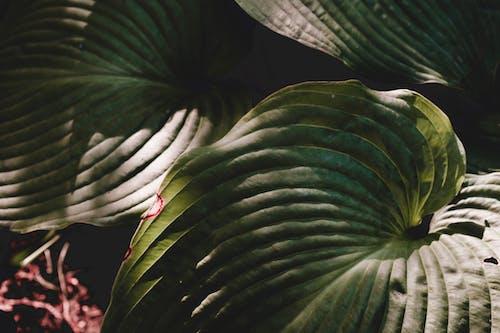 Lush green leaves in garden in sunlight