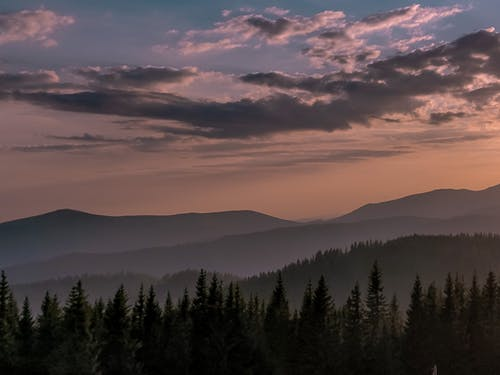 Picturesque view of wavy mount and coniferous tree silhouettes under bright sky at sundown