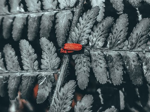 Red net winged beetles on leaf of green delicate fern growing in forest