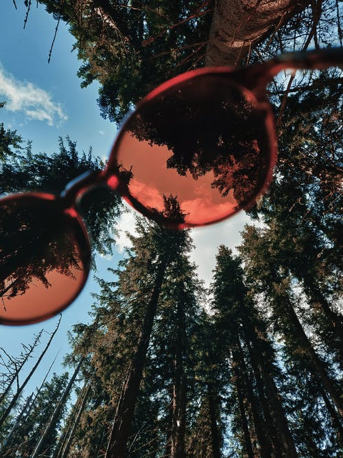 From below of unrecognizable person holding stylish red sunglasses near tall green coniferous trees in forest against blue sky