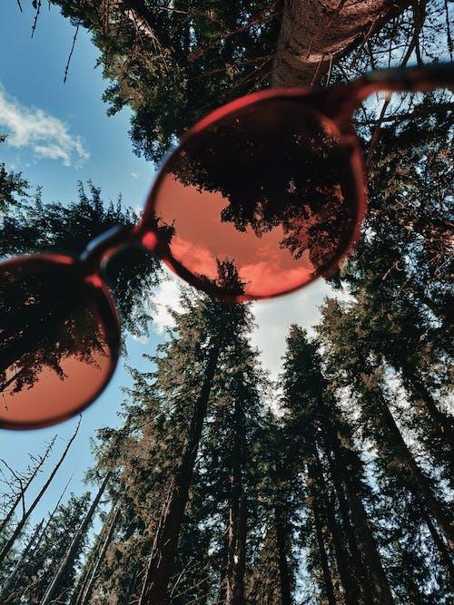 Photos gratuites de à feuilles persistantes, accessoire, aiguille, angle faible