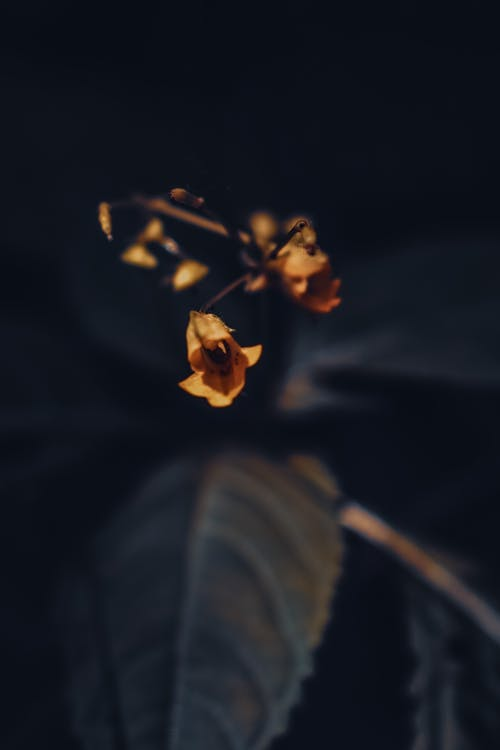 Selective focus of tiny small yellow fragile flowers with dark green leaves in park on blurred background