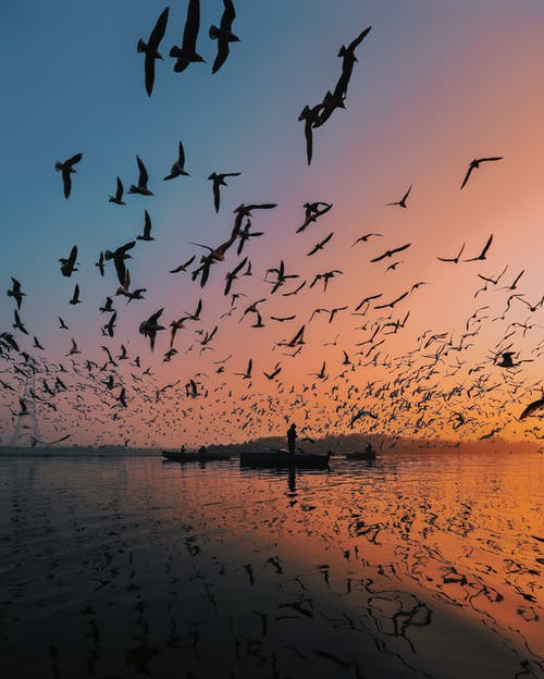 Flock of birds soaring over calm water with distant man standing in boat on surface at sunset time in nature