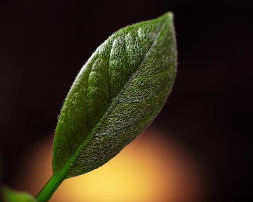 Kostnadsfri bild av blad, dagg, disjunkta, enkelhet