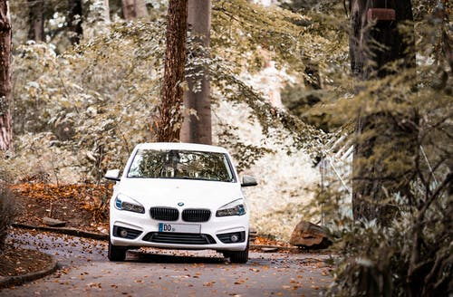 White Car Parked Near Trees