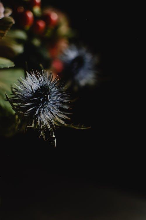 Macro Shot of Alpine Sea Holly