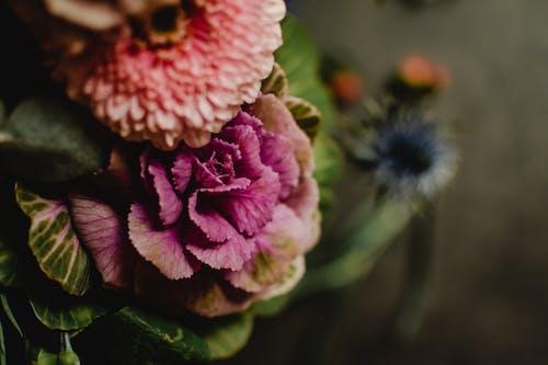 Δωρεάν στοκ φωτογραφιών με floral ρύθμιση, macro shot, ανάπτυξη
