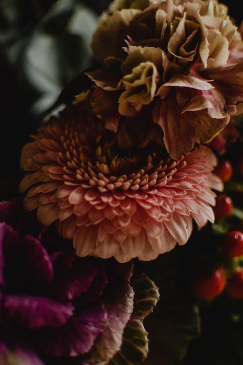 Macro Shot of Blooming Flowers