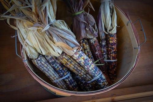 Free stock photo of agbiopix, corn, decoration, fall