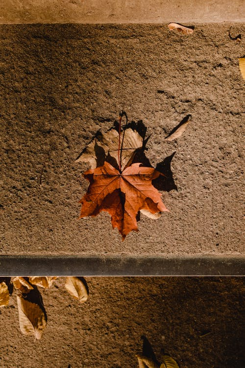 Brown Maple Leaf on Gray Concrete Surface