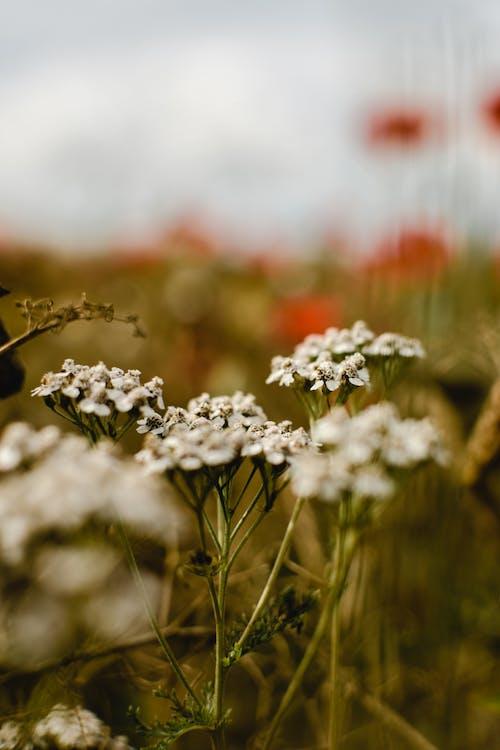 Close-Up Shot of Wild White Flowers