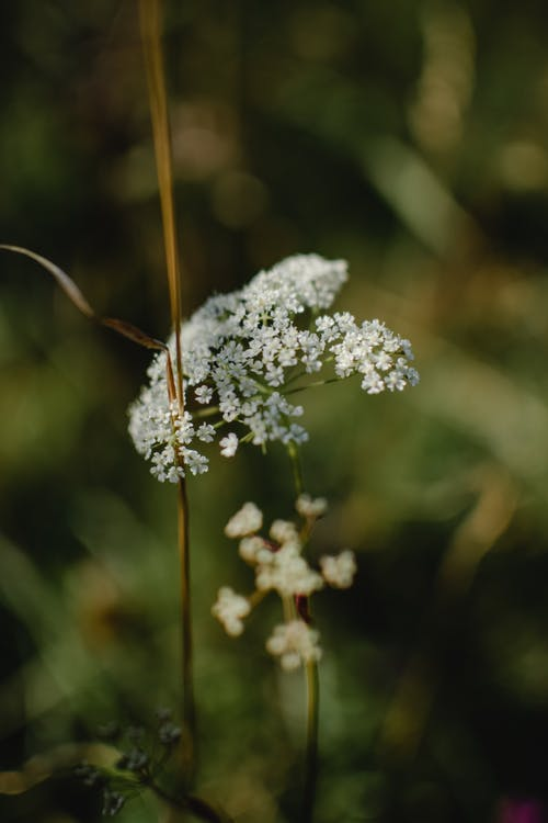 Close-Up Shot of White Flowers