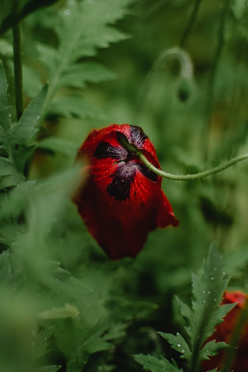 Red Flower in Close-up View