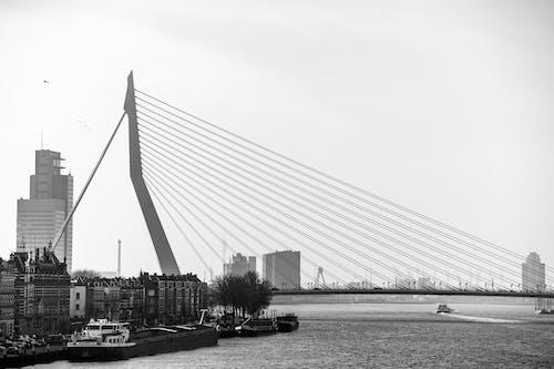 Grayscale Photo of Suspension Bridge over the River